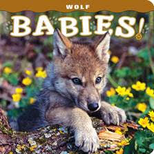 Wolf Babies book cover