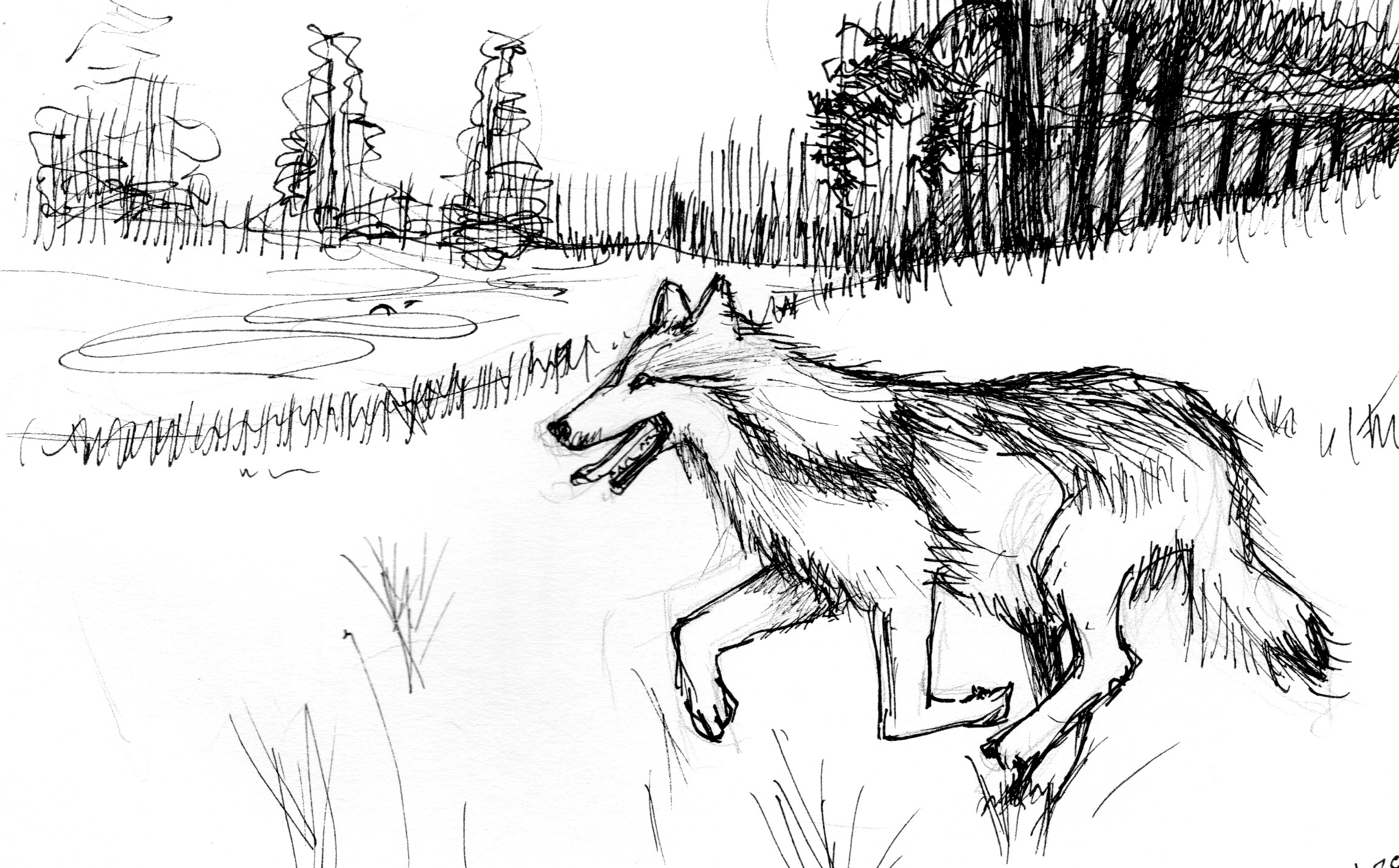 Wolf drawing by Janice for EOY2018 letter