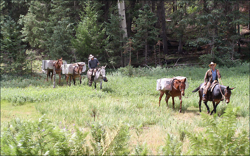 Aspen Pack Translocation by USFWS