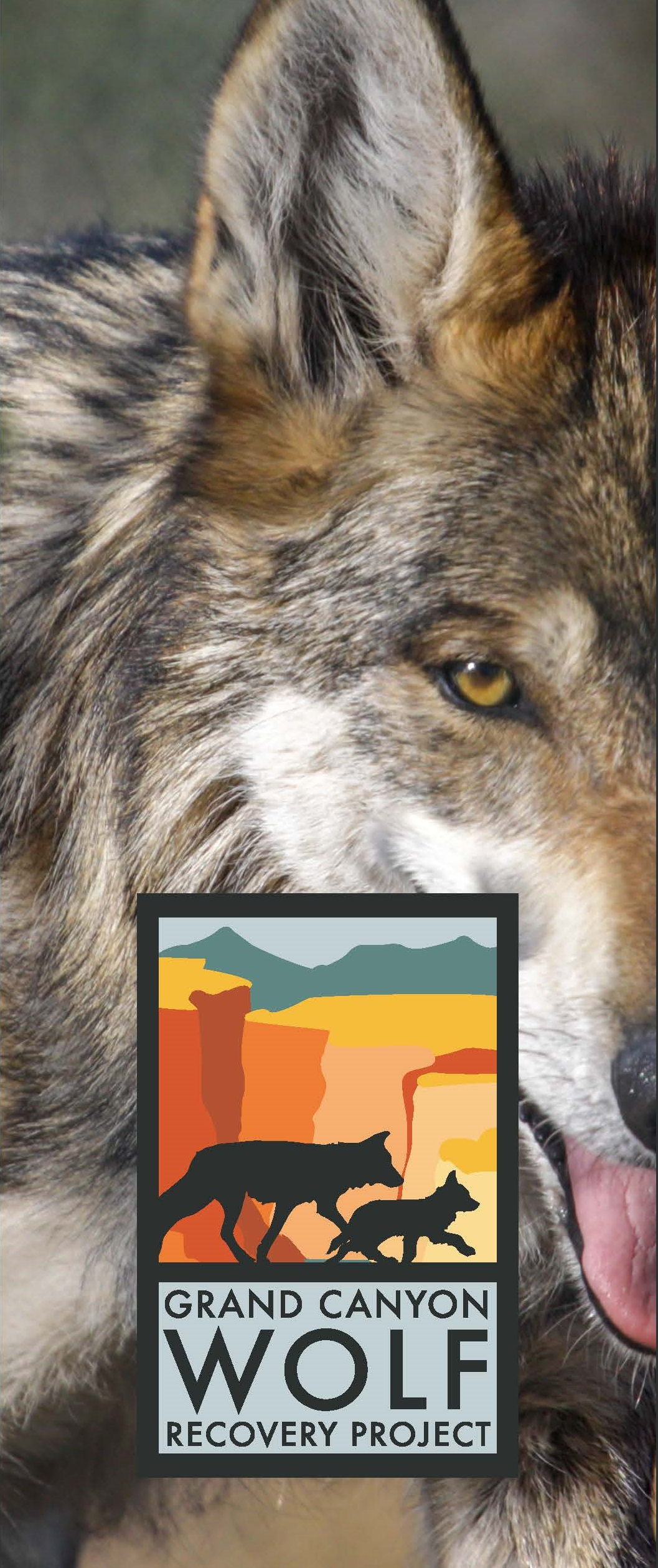 Grand Canyon Wolf Recovery Final 02132019 brochure cover