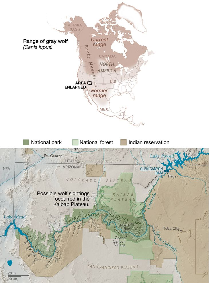 wolf range map for N America